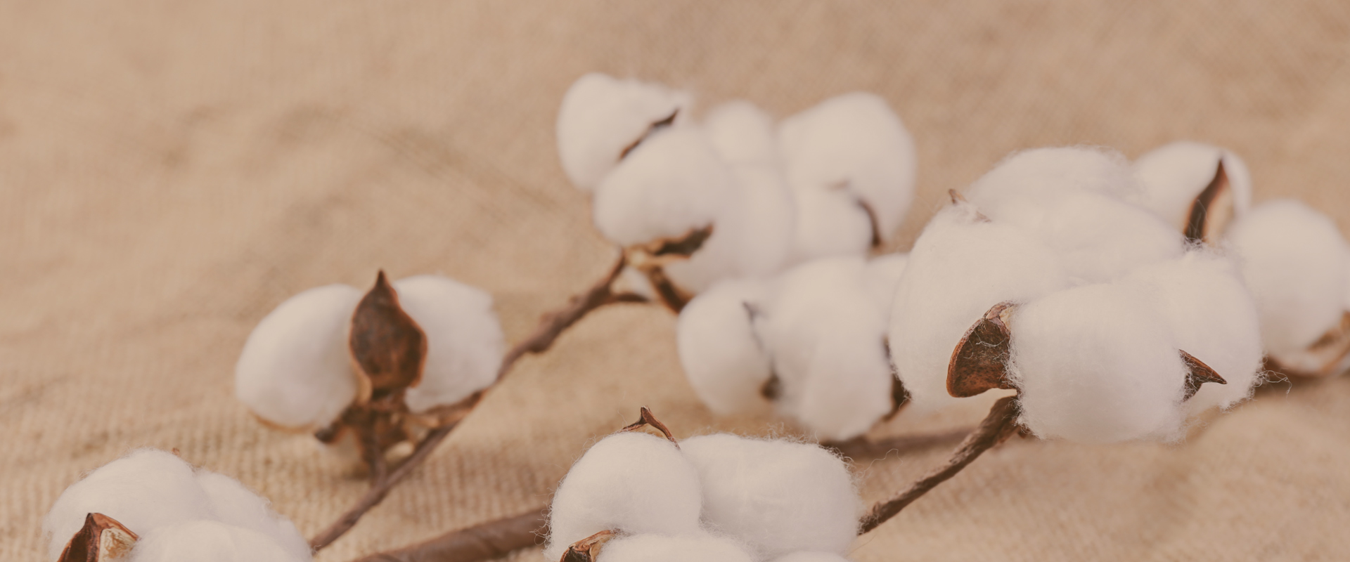 Blessings all over the world cotton warms the world